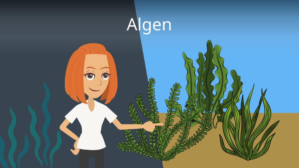 Zum Video: Algen