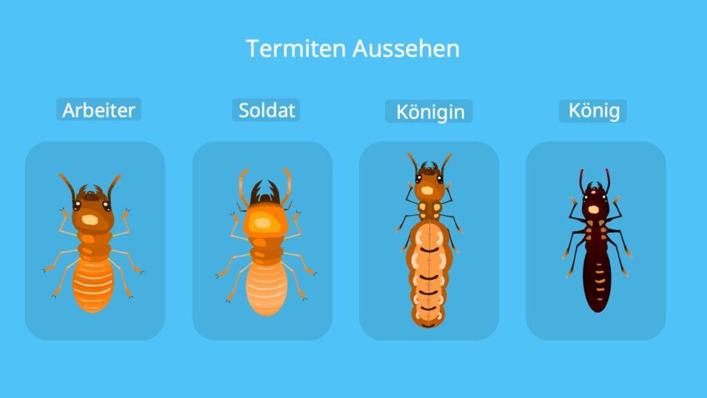 termiten, termite, weiße ameise, wie sehen termiten aus, was sind termiten, termitenkönigin, termiten königin, termiten ameisen unterschied