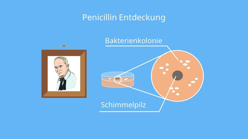 Alexander Fleming Penicillin, wann wurde penicillin erfunden, entdeckung des penicillin, fleming antibiotika, fleming nobelpreis; penicillin erfinder, penicillin entdeckung