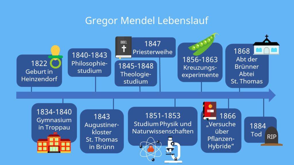 Gregor mendel Lebenslauf, Mönch, Vater der Genetik, Erbsen Experiment, mendel Erbsen, gregor mendel steckbrief