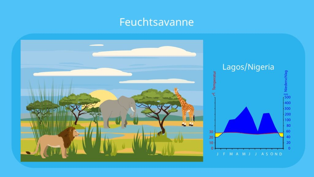 savanne, savanna, feuchtsavanne, vegetationszone, savannen, savannentypen, savannenlandschaft, die savanne, savanne pflanzen, savannengras, savanne bilder, bilder savanne, feuchtsavanne klima, feuchtsavanne nutzung, feuchtsavanne pflanzen, tiere in der feuchtsavanne, feuchtsavanne tiere, klima savanne, klimadiagramm feuchtsavanne, klimadiagramm savanne, pflanzen in der savanne, pflanzen der savanne, savanne vegetation, vegetation feuchtsavanne