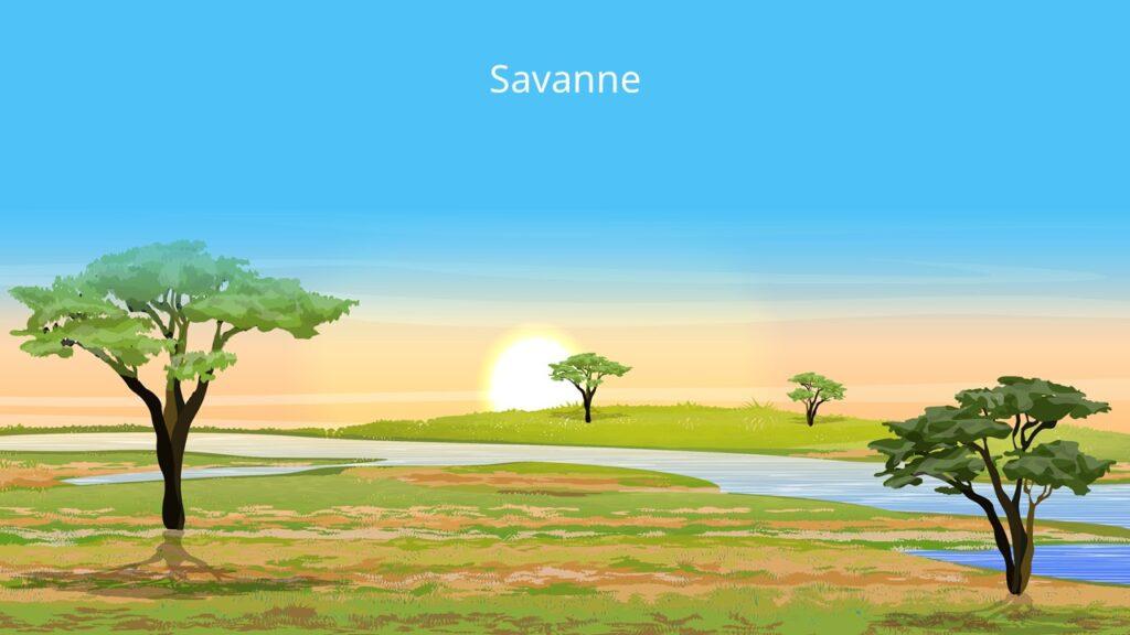 savanne, savanna, feuchtsavanne, trockensavanne, dornsavanne, dornstrauchsavanne, vegetationszone, savannen, savannentypen, savannenlandschaft, die savanne, savanne pflanzen, savannengras, savanne bilder, bilder savanne