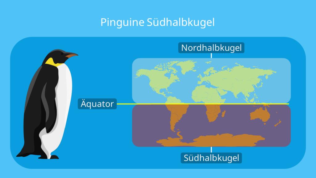 pinguin, pinguine, wo leben pinguine,der pinguin, pinguine lebensraum, pinguine südpol, pinguin südpol, pinguine südafrika, pinguine antarktis, antarktis pinguine