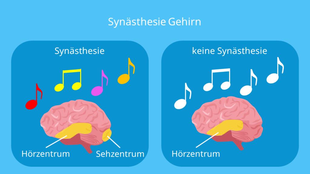 was ist synästhesie, zahlen in farben sehen, geräusche sehen, farben hören, menschen farben zuordnen, synästhetisch, farben schmecken, symästhetiker, synästhesie beispiel, gehirn
